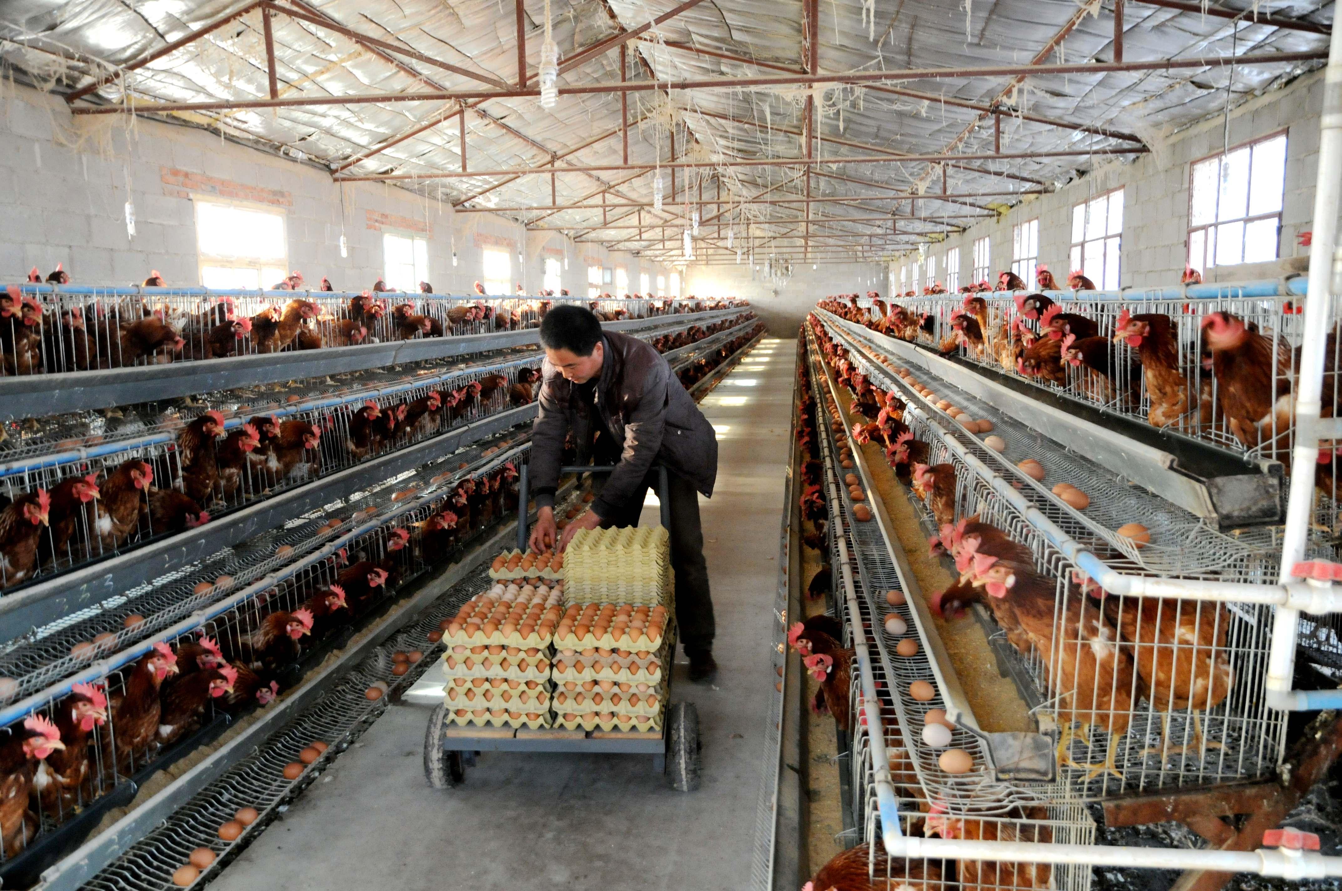 徽县大力发展畜牧养殖业