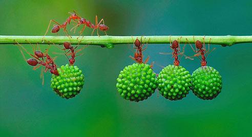 蚂蚁剪纸步骤图解
