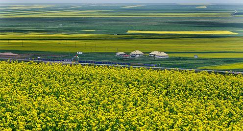 【摄影】十万亩油菜花竞相绽放