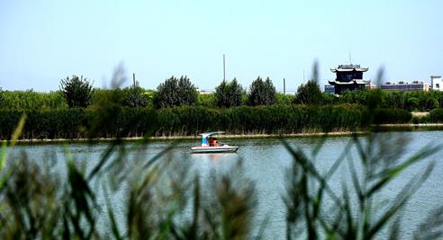 【摄影】市民湖中泛舟寻清凉