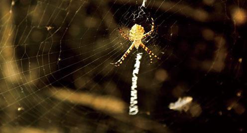 """【摄影】会写""""英文""""的蜘蛛"""
