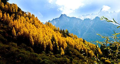 【摄影】祁连山区层林尽染 秋景如画