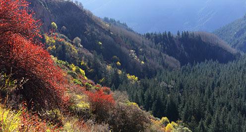 【摄影】马蹄寺景区层林尽染