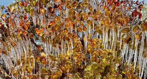 【摄影】ag88环亚娱乐|官方张掖:冰封树挂 晶莹如画