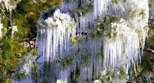【摄影】张家川冰挂景观美如画
