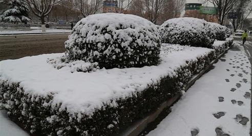 甘肅平涼迎來今春首場大雪 有效緩解當地旱情