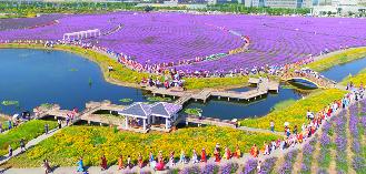 民族團結集體婚禮在金昌紫金花海舉行