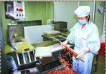 陇西县安排专项资金用于中药材加工企业的改造升级和规范化建设