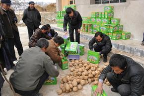 礼县马铃薯系列产品深加工项目