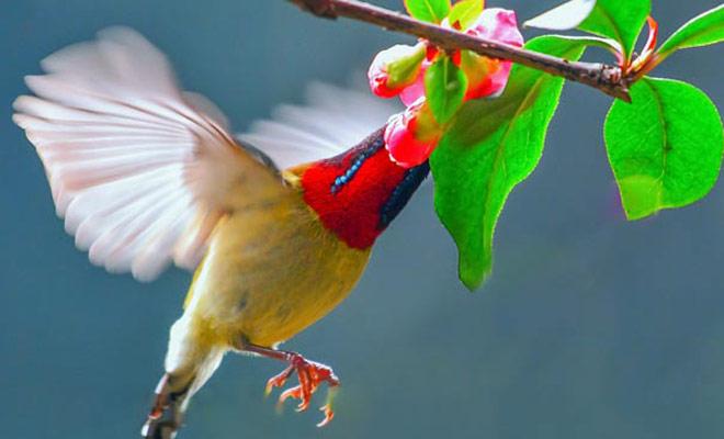 春來百鳥啼 這幾招讓你get鳥兒拍攝技巧