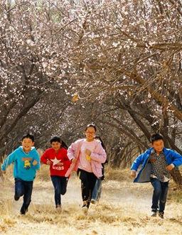 甘肅:春暖花開醉遊人