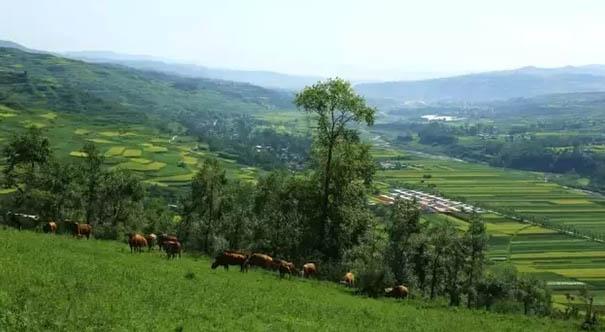 和政:今年將新增造林5.05萬畝