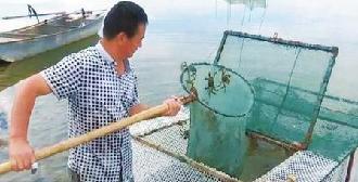 酒泉市河蟹養殖産業發展見聞