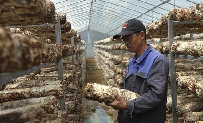 技术指导助力农民脱贫