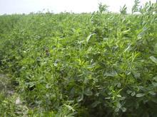 通渭县10万吨苜蓿草产品加工厂建设项目