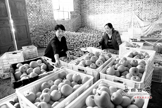 正寧縣蘋果種植面積達到20.82萬畝