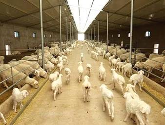 永昌县加快羊产业发展