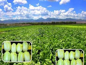 永昌县持续推进特色产业提质增效行动
