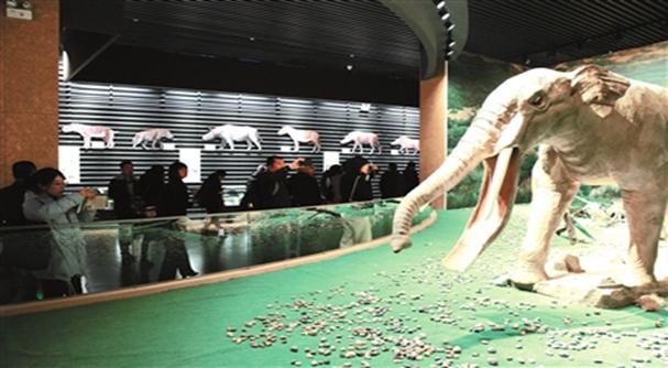 今年截至目前 和政古動物化石博物館共接待遊客二十二萬人次