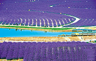 紫金花卉种植基地