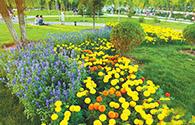市民在花团锦簇的公园休闲游玩