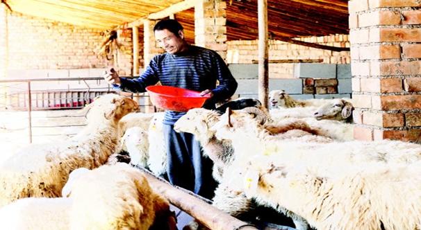 会宁大力发展养羊产业