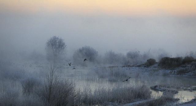 武威:大漠濕地霧凇美