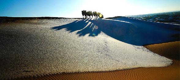 巴丹吉林沙漠駝鈴悠揚