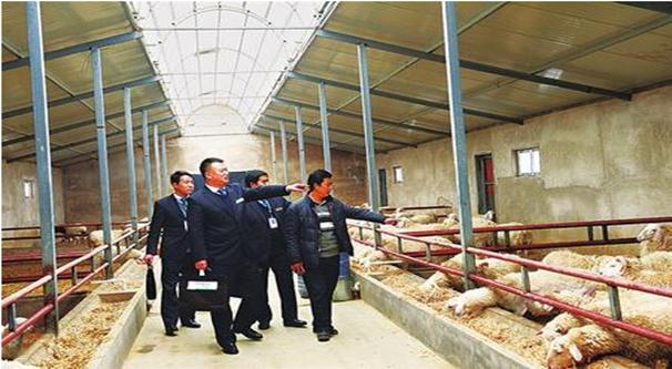 省农村信用社东乡县联社客户经理深入东乡贡羊专业合作社了解信贷需求
