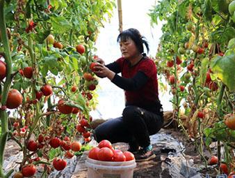 临泽县平川镇冬季农业生产忙