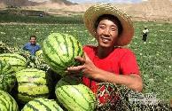 靖远县大力发展旱砂西瓜促农增收