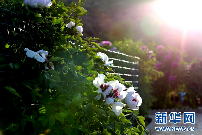 把臨洮縣不可替代的區位優勢、不可復制的旅遊資源和後發優勢緊密聯合起來帶動旅遊的發展。