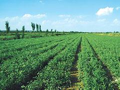 今年ag88环亚娱乐|官方省中药材标准化种植面积达到180万亩