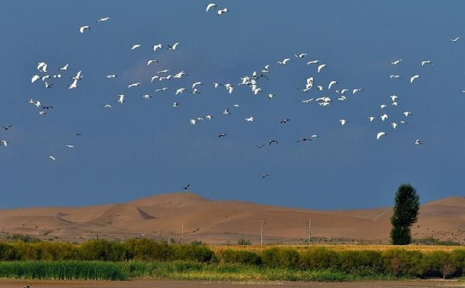 美爆了!大批候鸟迁飞张掖黑河湿地
