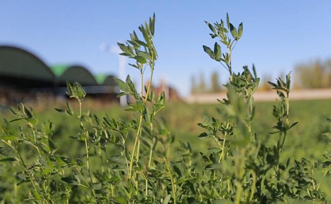南志标:小牧草 大产业