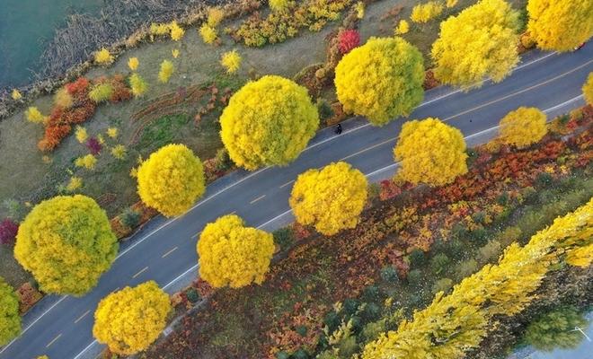 """【""""飞阅""""中国】戈壁湿地秋景:湖水靛蓝 柳树披金"""