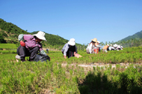 徽县高桥乡群众发展育苗产业