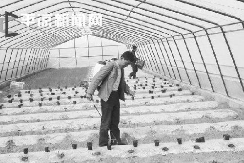 崇信县新建日光温室84座(图)